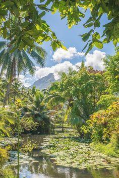 Tahiti Vacations, Dream Vacations, Places To Travel, Travel Destinations, Places To Go, Gauguin Tahiti, Nature Photography, Travel Photography, Photography Tips