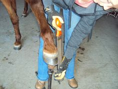 Trimming Your Own Horses: If something's been holding you back from learning to trim, this post is for you!