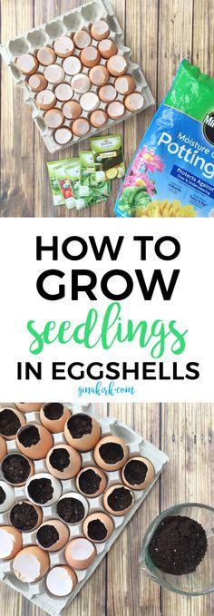 How to grow seedlings in eggshells   How to start seeds   Planting seeds   Eggshell seed starters   DIY gardening   DIY garden ideas   GinaKirk.com @ginaekirk