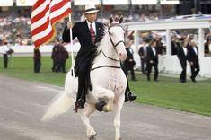 Теннесийская прогулочная лошадь (Tennessee Walking Horse)