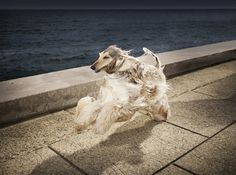 ShockBlast-Oliver-Metzger-photography-7