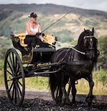 friesian horse carriage