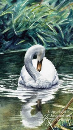 Watercolor painting of an elegant white swan by Jacqueline Tribble.