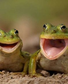 Happy Frogs :)) http://pewpaw.com/?p=10607