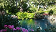 Landscaping is in full bloom around the backyard pool.