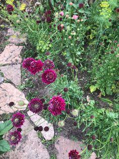 Stepping Stones, Garden, Outdoor Decor, Red, Home Decor, Stair Risers, Garten, Lawn And Garden, Interior Design