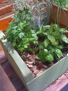 cajón para hierbas aromáticas