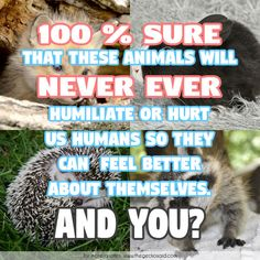 100 % sure that these animals will never ever humiliate or hurt us so they can feel better about themselfs. And you?  #100% #animals #better #ever #feel #humans #humiliate #hurt #never #quotes #themselves #you