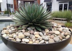 Agave and rocks in large pot