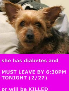 SUPER URGENT 02/27/15 Brooklyn Center LALA – A1028945 **MUST LEAVE BY 6:30PM TONIGHT (2/27)** FEMALE, YORKIE MIX, 7 yrs, STRAY –OWN SURR, NO HOLD Reason PET HEALTH Intake condition ILLNESS Intake Date 02/27/2015 https://www.facebook.com/Urgentdeathrowdogs/photos/pb.152876678058553.-2207520000.1425073847./969014553111424/?type=3&theater