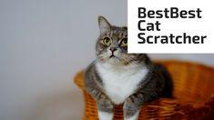 Best Cat Scratcher All Types Of Cats, Cat Activity, Cat Scratcher, Scratching Post, Cat Toys, Cool Cats, Your Pet, Pets, Animals