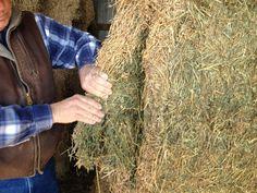 Alfalfa Hay for Horses Delivered