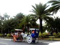 Horse Carriage Tours in Manila - Avoid getting ripped off! Asia Travel, Travel Tips, Horse Carriage Rides, Manila, Philippines, Tours, Horses, Travel Advice, Horse