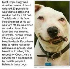 So sad. But great he lived! How could someone ever hurt one of these loyal creatures that love us so much?