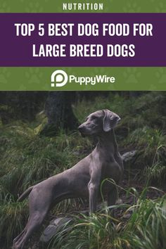 Picking the best dog food for large breeds isn't always easy. That's why we are here to help you choose the best food for your large breed dog. We have selected the top 5 picks with reviews. Best Dog Food, Best Dogs, Large Dog Breeds, Dog Food Recipes, Animals, Journal, Easy, Pretty Animals, Pets