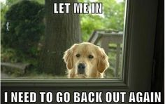 Ahhhhh this is so my dog except she wants to go out to be let back in a second later :/