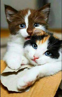 Blue-eyed beauties!