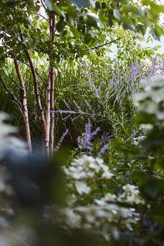 Montreal based design firm specializing in Architecture, Landscape Architecture, Urban Design and Interiors. Design Firms, Urban Design, Landscape Architecture, Plants, Plant, Planets, Landscape Design, Landscape Art
