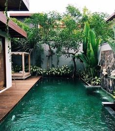 Pool Landscaping, Tropical