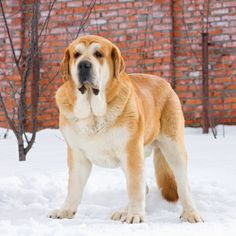 Tips to Protect Pets During Winter Storms