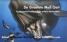 Natuurhistorisch Museum Rotterdam: Natuurhistorisch Museum Rotterdam