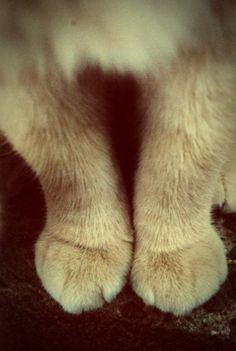 Reverie Of An Old Soul Photography #cat #kitty #paws #cute #animal