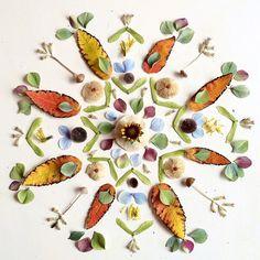 Mandala - Flora Forager - Bridget Beth Collins - http://floraforager.com