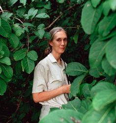 Valerie Jane Morris-Goodall nació en Londres, Inglaterra, en el año 1934. Como primatóloga, estudió el uso de herramientas en chimpancés, a quienes ha dedicado el estudio de toda su vida. Jane ha realizado profundas y fructíferas investigaciones científicas sobre el comportamiento, el uso de herramientas y los modos de vida de los chimpancés. En 2003, sus trabajos fueron reconocidos por la comunidad científica con el Premio Príncipe de Asturias de Investigación Científica y Técnica.