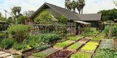 """""""Em um ano em 370 m², essa família consegue produzir mais de 2.000 quilos de verduras, além de frutas de época, ovos de galinhas, entre outros tipos de alimentos. Sua produção é tão abundante que acaba por gerar uma renda de aproximadante 20.000 dólares. """""""