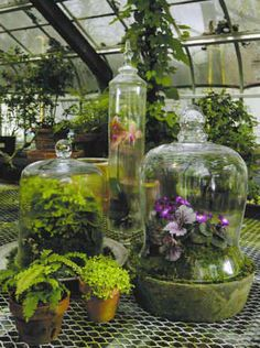 and Enclosed Wardian Case Terrarium love this for indoor gardening - plants improve a space so much. DIY Terrarium guide, with step-by-step instructionslove this for indoor gardening - plants improve a space so much. DIY Terrarium guide, with step-by-step Terraria, Container Plants, Container Gardening, Container Size, Glass Containers, Garden Cloche, Decoration Plante, Saintpaulia, Urban Gardening
