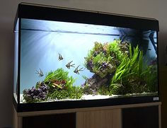 You have fish tank for indoor that's mostly called aquarium. People keep the fish and aquatic creatures in this place . Read Awesome Aquascaping Ideas You Will Totally Love Planted Aquarium, Aquarium Aquascape, Diy Aquarium, Aquarium Design, Saltwater Aquarium Setup, Aquariums, Nature Aquarium, Saltwater Tank, Marine Aquarium