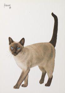 Postkaarten Francienªs Katten Francien Westering, van C6045 Katten (Siamezen), Postkaarten, Tekeningen, Dieren, Katten,