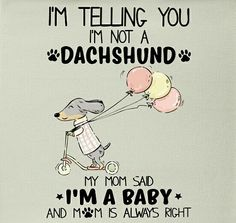 "See our website for additional relevant information on ""Dachshund dogs"". It is a superb location to learn more. Dachshund Breed, Dachshund Funny, Dachshund Art, Long Haired Dachshund, Daschund, Dapple Dachshund, Dachshund Quotes, I Love Dogs, Puppy Love"