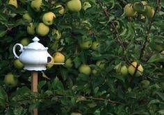 teapot bird house - how clever!