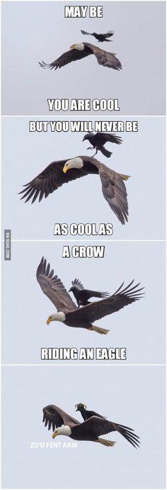 Bald Eagles:  A Crow Riding An Eagle.