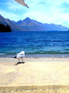 This photograph was taken while I was walking around Lake Wakatipu in Queenstown, New Zealand. A seagull photobombing his friends picture! What else are friends for! www.theglamcurl.com