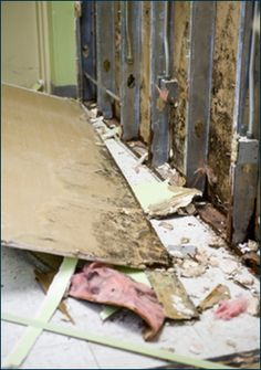 Plz Like Comment Or Repin If You Environmental Remediation Mold And Mildew