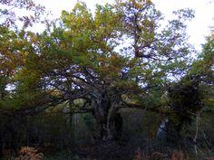 Hay un árbol más fuerte que los demás. Aún conserva algunas hojas verdes  que se resisten al frío y al viento.