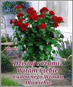 Motto, Plants, Polish, Pictures, Flora, Plant, Mottos, Planting