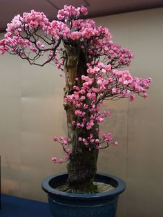 Bonsai with pink flowers