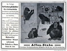 Original-Werbung/Inserat/ Anzeige 1908 - AFFEN-STUBE / KAHLENBERG & GÜNTHER GR.-LICHTERFELDE ca. 140 x 100 mm