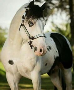horses - Equestrian and Horse Photographer © Most Beautiful Animals, Beautiful Horses, Beautiful Creatures, Beautiful Eyes, Horse Photos, Horse Pictures, Zebras, Cheval Pie, Animals And Pets