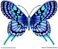 Blue Butterfly Drawing | blue tattoo | 60 Butterfly Tattoos | Feminine And Tribal Butterfly ...