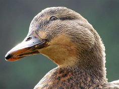 Some people don't want this angle because it will show their sagging chins. But this divine duck has no problem with it!