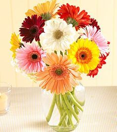 Vase filled with beautiful colorful vibrant gerber daisies and a touch of greenery.