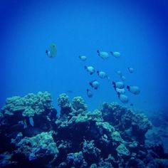 #Waikiki #scuba #diving #Hawaii http://ift.tt/1w0UFFr @hawaiiscubadiving