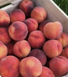 Frog Cakes, Peach Fruit, Peach Aesthetic, Strawberry Fields, Just Peachy, Fruit Snacks, Bubble Tea, Vegan Life, Rose Buds