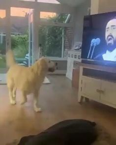 Cute Little Animals, Cute Funny Animals, Funny Dogs, Mundo Animal, My Animal, Funny Animal Videos, Funny Animal Pictures, Beautiful Dogs, Animals Beautiful