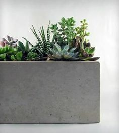 cement planter and succulents