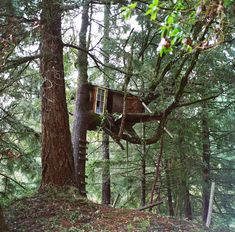 Kyle's Tree House